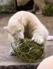 Jääkaru-2.jpg