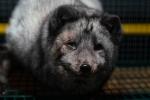 Kruunupyy - Fur farm - 2019-4 - DSC03623-1.jpg