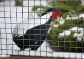 """Keskraamatukogu avab loomaaias Looduse lugemissaali ja lugemisprogrammi """"Suvi raamatuga"""""""