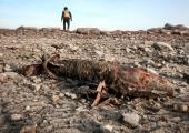 Päästeameti demineerijad tegid kahjutuks neli sõjaaegset lõhkekeha