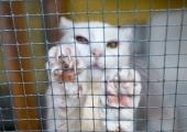 Loomade varjupaik asub alates homsest Paljassaare teel