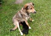 Politsei otsib Pärnumaal õhkrelvast koera lasknud huligaani