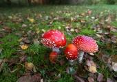 Kaitsevägi manitseb seenelisi olema harjutusaladel tähelepanelik