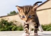 VAHVA VIDEO! Täna on rahvusvaheline kassipäev!