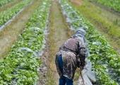 Põllumehed: riik peab suutma tagada tasemel arstiabi ka maainimestele