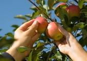 Maastikuarhitekt Liis Pihl: linnaelanike ühises aias võiks kasvatada viljapuid ja marjapõõsaid