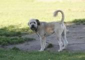 Tallinna loomade varjupaik koerte tõttu kaebusi pole saanud