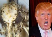 Teadlased panid imepisikesele koile Donald Trumpi järgi nime