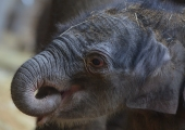 SOOJENDAB KA SÜDANT: Kohalikud kudusid elevantidele kampsunid, et kaitsta neid krõbeda külma eest