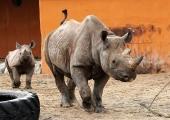 Loomaaed tähistab täna ninasarvikupäeva