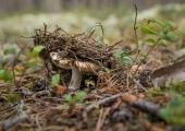 Loodusmuuseum näitab viimaseid päevi seeneaasta rikkusi