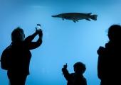 Keskkonnaministeerium: liikide kaitsmine vajab rahvusvahelist koostööd