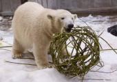 Loomaaed kutsub jääkarude sünnipäevale