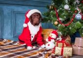 Tee jõulukingi ostuga loomadele heategu