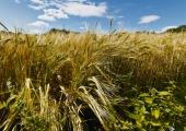 Põllumajandustootmine on madalseisust üle saanud