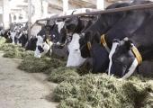 Loomus: Soome loomapidamisprohmakad on ka Eestis legaalsed