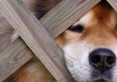 Leht: Saaremaal on koerad hakanud kärntõppe nakatuma