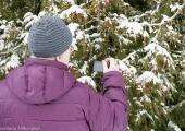 FOTOD! Tallinna Botaanikaaia Palmimajas tutvustati taimeriigi kevadekuulutajaid