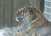 GALERII! Loomaaias viis külastajad kevade otsimiskäigule Aleksei Turovski
