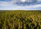 """Eesti metsade kohinad on talletatud EV100 teoses """"Eesti metsanduse 100 aastat"""""""