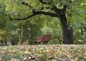 Tallinn tähistab taas Parkide päeva