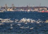 Abilinnapea Izmailova palub Tallinna lahe reostajatest teada anda