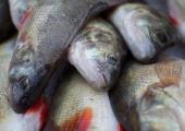 Laupäeval toimub üle-eestiline avatud kalasadamate päev