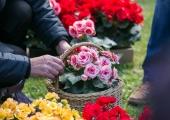 Kadriorule lisab laupäeval värvi Faehlmanni tänava festival