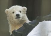 Liigikaitse foorumi esimene päev keskendus ebaseaduslikule loomaärile
