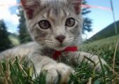 Pärandatud raha eest valmib Saaremaal kasside turvakodu