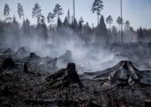 Vikipalu põlenguala on kahanenud 40 hektarile