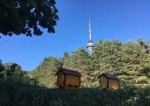 Tallinna Botaanikaaias alustasid tööd mesilased