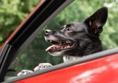 Lemmikloomadega reisimisel tuleb olla tähelepanelik