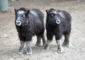 Loomaaias tulevad suvepäikest nautima ka seni varjul olnud loomapojad