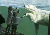 FOTOD! Loomaaias sai jääkaruga koos jäätist süüa