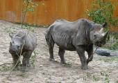 Loomaaias tuleb vahva ninasarvikupäev