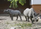 GALERII! Loomaaed tähistas ninasarvikute päeva