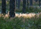 Eesti saab juurde kuuenda rahvuspargi