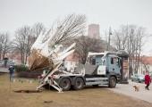 Reidi teele ette jäänud kirsipuud saavad uue kasvukoha