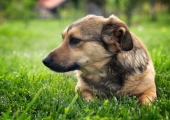 Õismäe raba AvaLinna äpis: populaarseimaks ideeks osutus koerte jalutusväljak