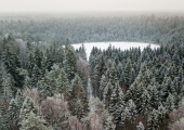Eesti metsade pindala ja varu eelmisel aastal suurenes