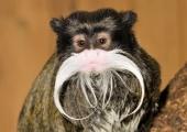 Vanade mobiilide kogumine aitab ahvide kodu hoida