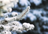 Prognoos lubab miinuskraadidega lumiseid jõulupühi
