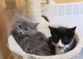 Loomakaitsjad: kuudid tuleks soojustada ja kassid toas hoida