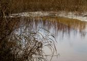 Pärnu jõe proovidest leiti 40 arstimi jääke