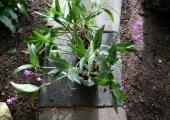 Botaanikaaed avab suvehooaja ja kutsub aiandusteraapia loengule