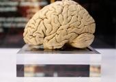 Ajuuurija: Pidev uudise jahtimine jätab aju sotsiaalmeedia lõksu