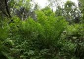 Petuskeem: metsa eksinute lähedastelt nõutakse raha
