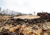 Kodanikuühendus nõuab keskkonnaministeeriumi vastutusele võtmist