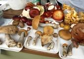 Bioloog: tänavune seeneaasta on mullusest parem